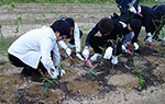 Tree Planting Day in Japan