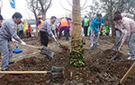 Tree Planting Day in China
